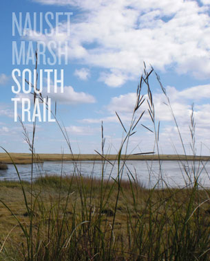 Nauset Marsh - South Trail