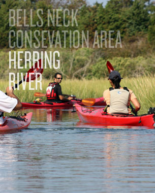 Bell's Neck Conservation Area - Herring River